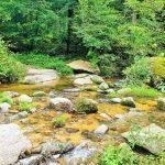 ein Wildbach fließt durch das Pesenbachtal