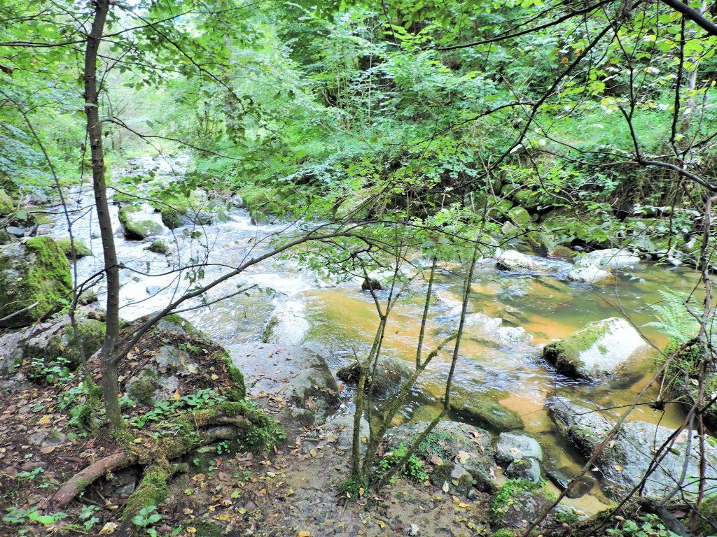 Naturschutzgebiet Pesenbachtal mit Wildbach