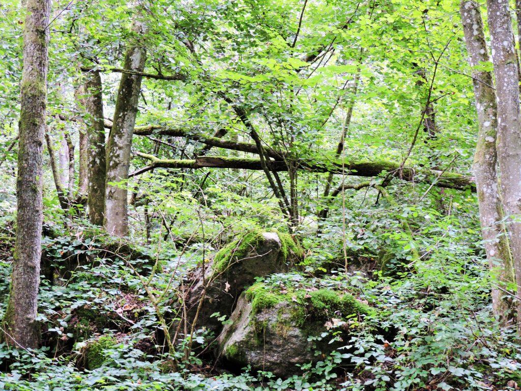 Urwald mit Bäumen und Felsen