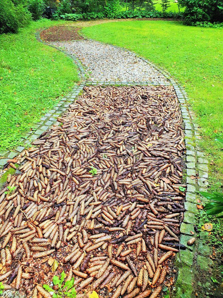 Kneipp Parcour im Kurpark