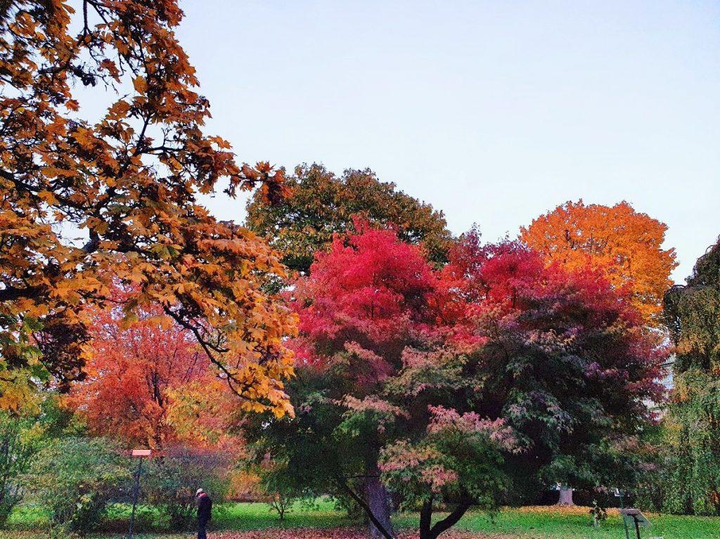herbstliche Farbenpracht von Parkbäumen