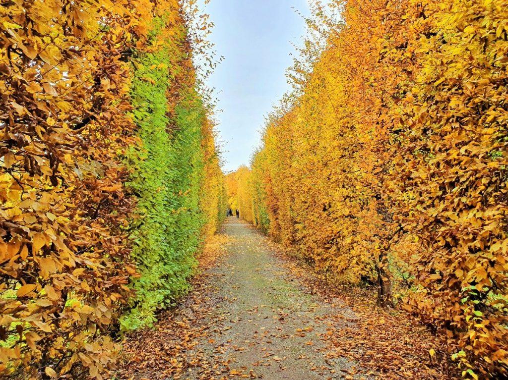Blätterwald Allee im goldenen Herbst