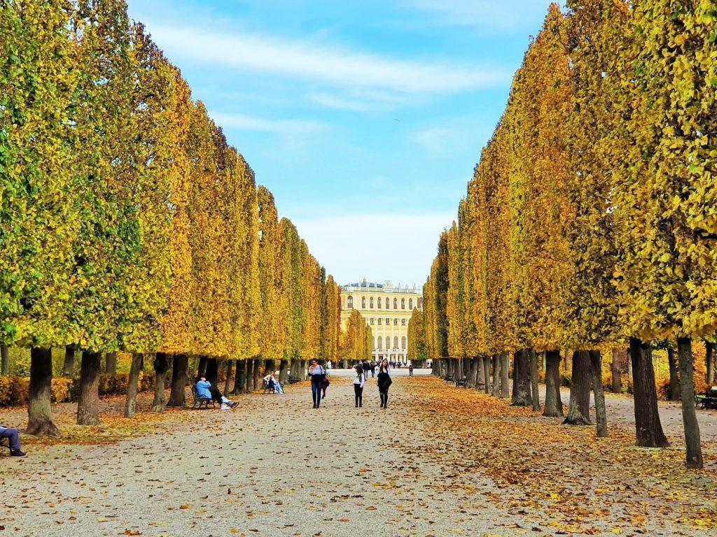 prachtvoll herbstliche Baumallee mit hohen goldfarbigen Laubbäumen