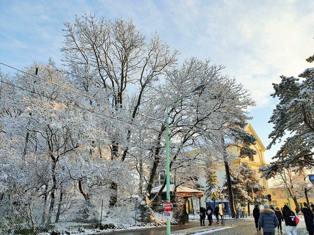verschneiter großer Baum