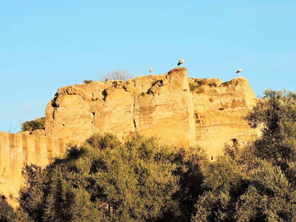 Störche auf einem Felsen, Marokko