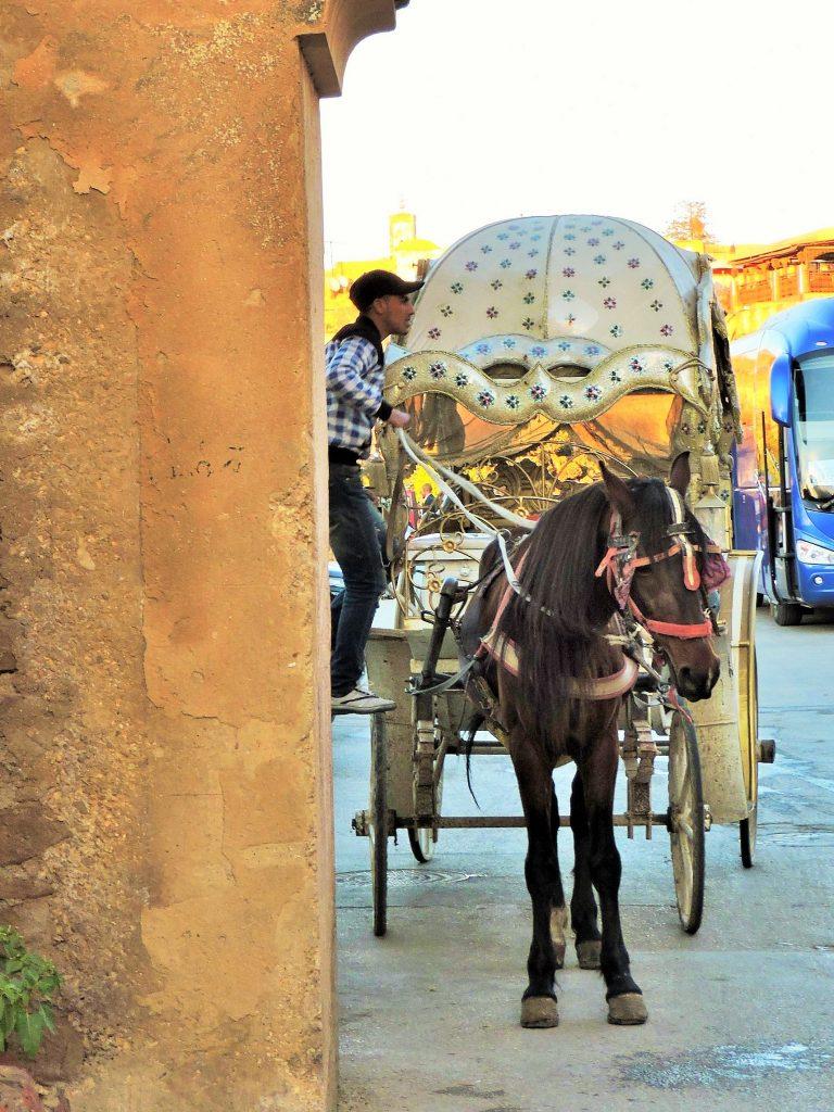 marokkanische Kalesche mit Pferd