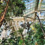 Palmen unter einem Glashaus, Palmenhaus Schönbrunn Ausflug