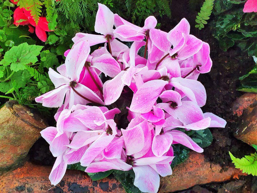 weiß-lila Blumen