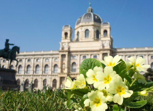 Kunsthistorisches Museum im Hintergrund, davor Frühlings-Blumen