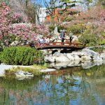 Brücke am Teich im Setagaya Park mit Blütenzauber