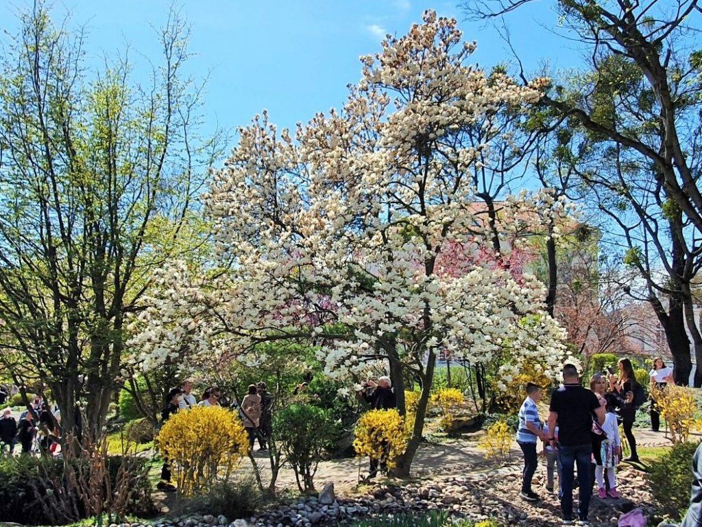 Kirschblüte im Setagaya Park