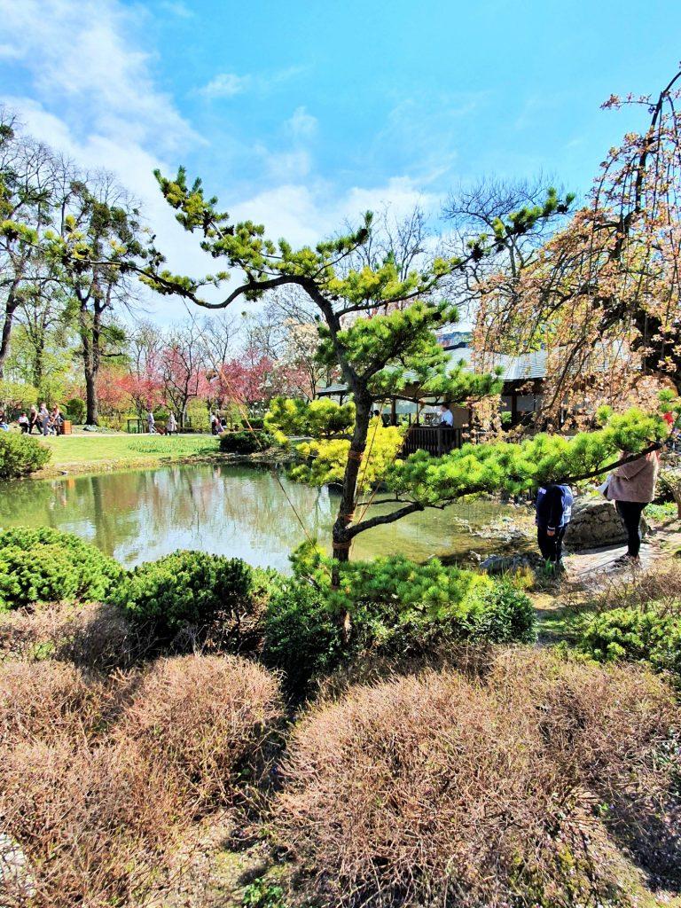 exotische Pflanzen im japanischen Garten