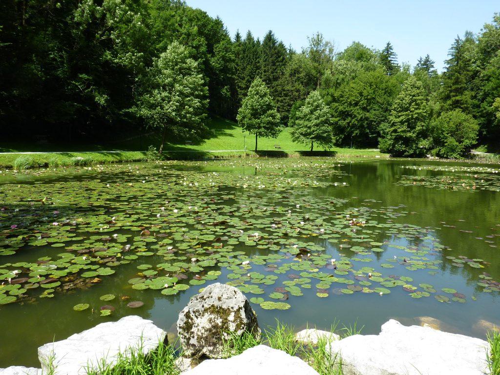 Egelsee, idyllischer See mit Seerosen in grün bwaldeter Landschaft