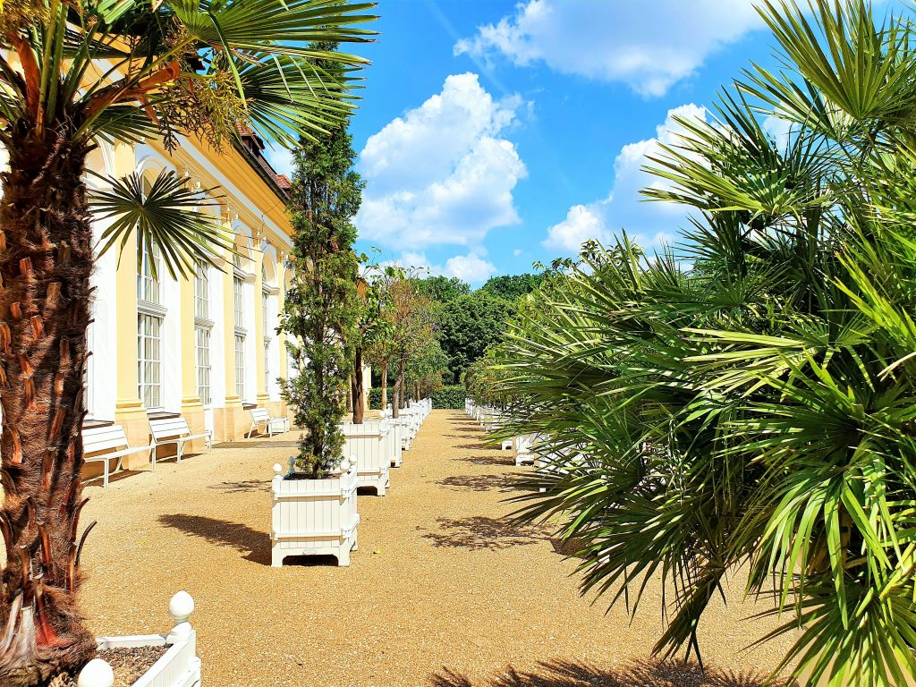 Orangerie Hofgarten mit Palmen, Ansbach