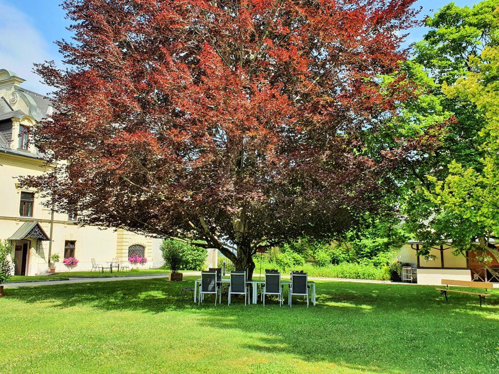 Klosterfasten im Park des Johannes-Schlössl unter großem Baum, Salzburg