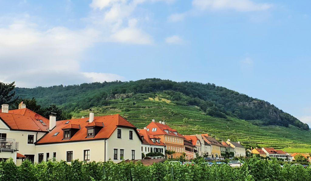 Weinberge in der Wachauu