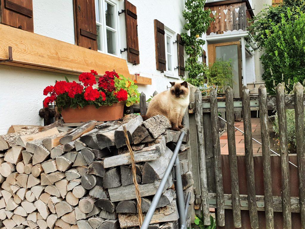 Katze auf einem Holzstoß vor dem Haus sitzend